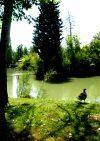 Il Parco delle Terme e il Laghetto Scardovi