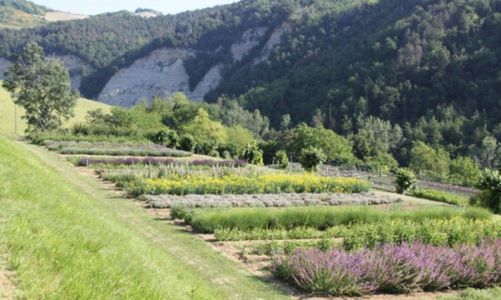 Eventi al Giardino delle Erbe