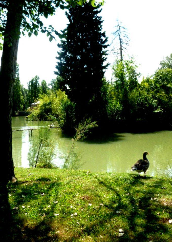 Il Parco Lungo Sillaro e il Laghetto Scardovi